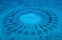 Il mistero dei cerchi sul fondo del mare Adriatico